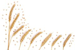 Grain et oreilles de blé d'isolement sur le fond blanc avec l'espace de copie pour votre texte Vue supérieure Modèle plat de conf Image stock