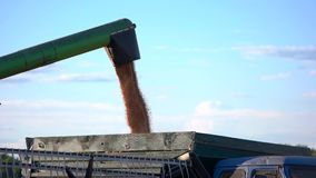 Grain falls into a truck. stock footage