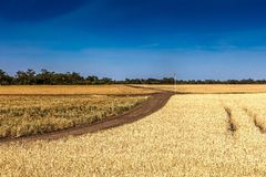 Grain farm Royalty Free Stock Image