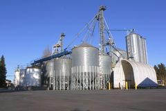 Grain Feed Plant Stock Photography
