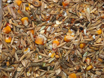 Grain feed for rodents Royalty Free Stock Image