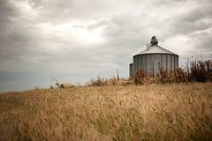 Grain field stock images