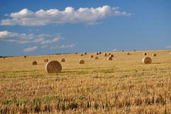 Grain field. After harvest - summer royalty free stock images