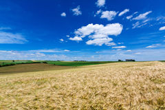 Grain Field. During summer in Luxembourg Stock Image