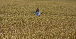 Grain field Stock Photography