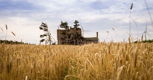 Grain field and abandon house Stock Images