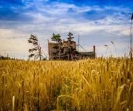 Grain field abandon house Royalty Free Stock Image
