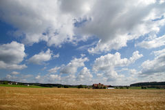 Grain field in Bavaria, Germany Stock Photography