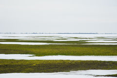 Grain field covered by snow Royalty Free Stock Image