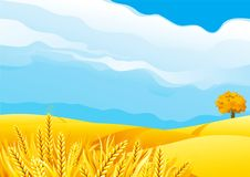 Grain field royalty free illustration