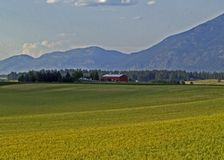 Grain Field, Farm, Barn and Mountains Royalty Free Stock Photo