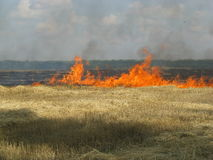 Grain field on fire royalty free stock photo