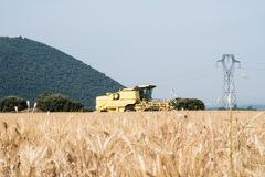 Grain field in the foreground in Provence with combine in the ba Stock Photography