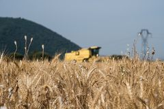 Grain field in the foreground in Provence with combine in the ba Stock Photo