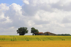 Grain field in france, dordogne Royalty Free Stock Images
