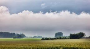 Grain Field on Funen, Denmark Stock Image