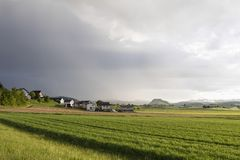 Grain field glows in the sunlight after a heavy thunderstorm. In Switzerland Royalty Free Stock Images