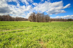 Grain field green grass and forest. Green fields and forest in Transylvania Stock Photos