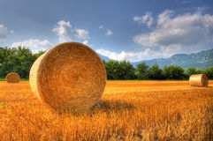 Grain field after harvest. In late summer Stock Image