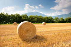 Grain field after harvest. In late summer Stock Images