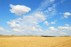Grain field after harvesting with white clouds Royalty Free Stock Images
