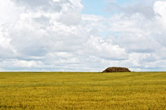 Grain field with haystacks. Landscape with yellow grain field, haystack or straw on a background of sky royalty free stock images