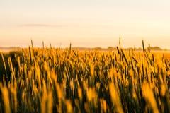 Grain field outside city stock image