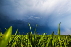 Grain field and sky Royalty Free Stock Images