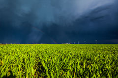 Grain field in sunlight Royalty Free Stock Image