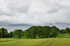 Grain field Royalty Free Stock Image