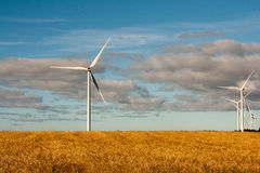 Grain field with windmills Stock Photos