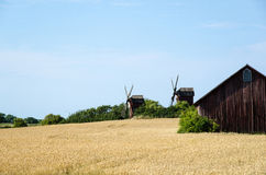 Grain field with windmills Royalty Free Stock Images