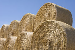 Free Grain Field12 Royalty Free Stock Photos - 1104818
