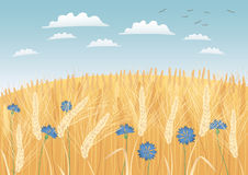 Grain fields. Ready to harvest stock illustration