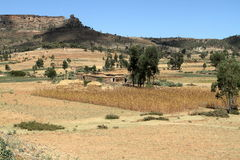 Grain fields and farms in Ethiopia Royalty Free Stock Images