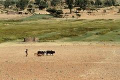 Grain fields and farms in Ethiopia. A Grain fields and farms in Ethiopia Stock Photography