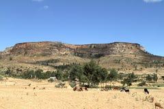 Grain fields and farms in Ethiopia. A Grain fields and farms in Ethiopia Stock Image