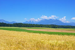 Grain fields in Gorenjska region Slovenia Stock Photography