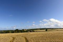 Grain fields near Leedston, Cornwall Royalty Free Stock Photography