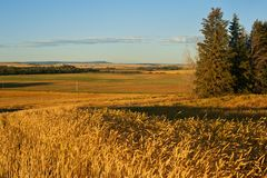 Grain fields at sunrise in fall Royalty Free Stock Images