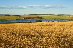 Grain fields at sunrise in fall Royalty Free Stock Photo