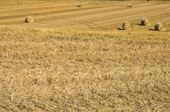 Grain Fields. In Tuscany, Italy Royalty Free Stock Images