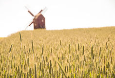 Grain fields and windmill Royalty Free Stock Photography