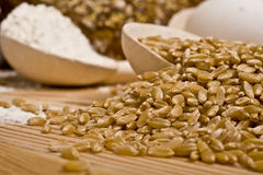 grain and flour Royalty Free Stock Photography