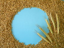 Grain frame Royalty Free Stock Photo