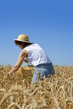 Grain harvest. Young woman with a basket in a grain field Royalty Free Stock Photography