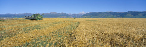 Grain harvest, Stock Photos