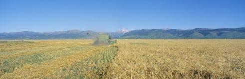 Grain harvest Royalty Free Stock Photos
