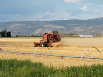 Grain harvest Royalty Free Stock Photography
