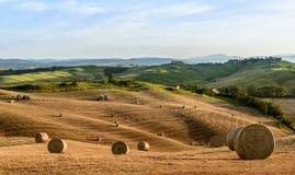 Grain harvest Stock Images